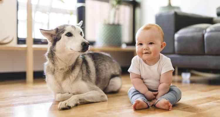 newborns and pets